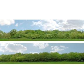 ID Backscenes ID147B 15 Inch Backscene Trees Set B
